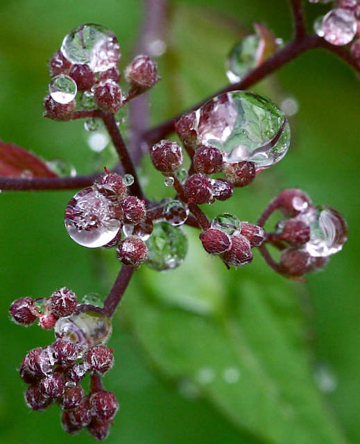 "photo ""Scenes in raindrops"" tags: macro and close-up, nature, flowers"