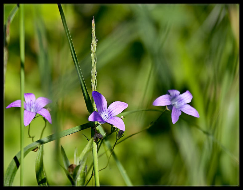 "photo ""Field flowers"" tags: nature, flowers"
