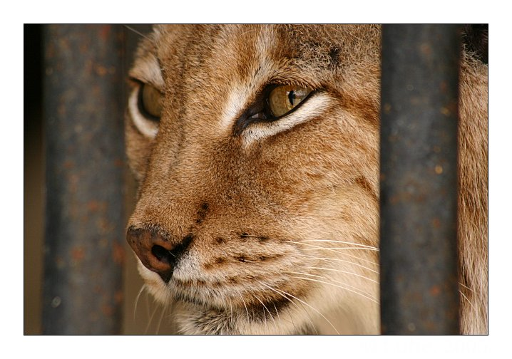 "photo ""Jailed"" tags: nature, wild animals"
