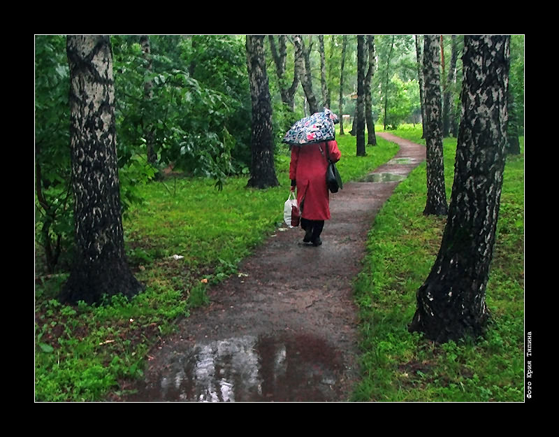 """photo """"It Rains"""" tags: landscape, genre, forest"""