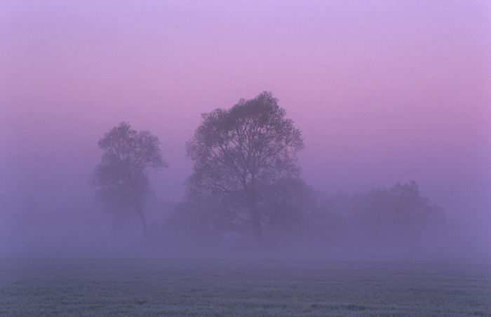 "photo ""Trees in the morning mist"" tags: landscape, sunset"
