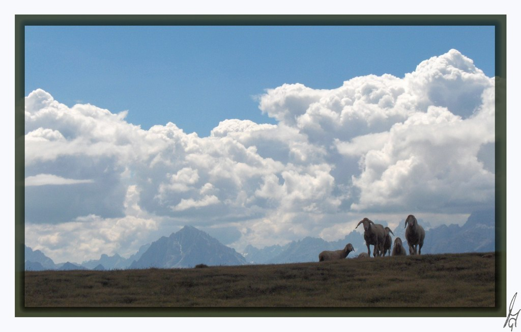 "photo ""sheeps on alpine pasture"" tags: misc.,"