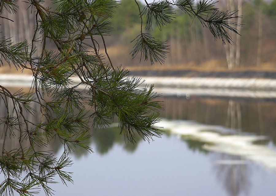 "photo ""About spring and a pine"" tags: landscape, spring, water"
