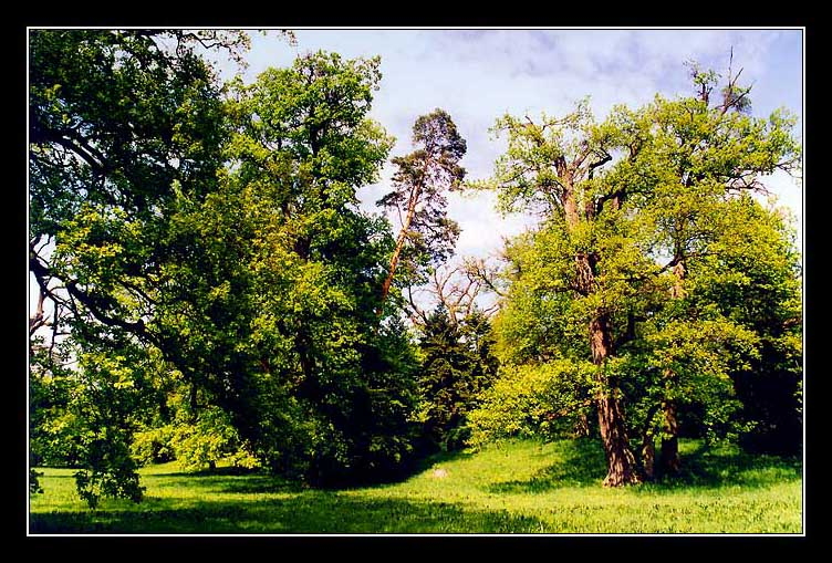 "фото ""Лесной пейзажик"" метки: пейзаж, лес, лето"