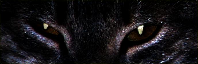 "photo ""predator"" tags: misc.,"