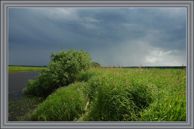 "photo ""Before a thunder-storm"" tags: landscape, nature, flowers, summer"
