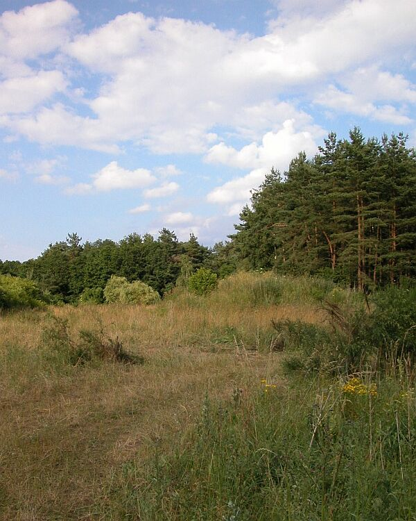 "photo ""Not ended landscape"" tags: landscape, forest"