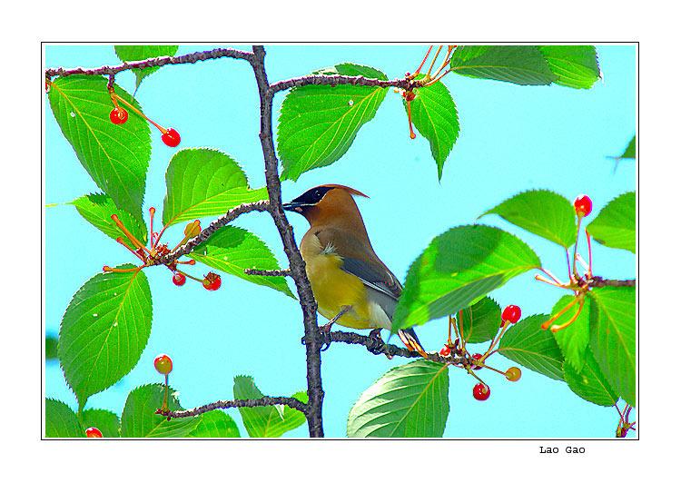 """фото """"bird.tree"""" метки: разное, природа, дикие животные"""