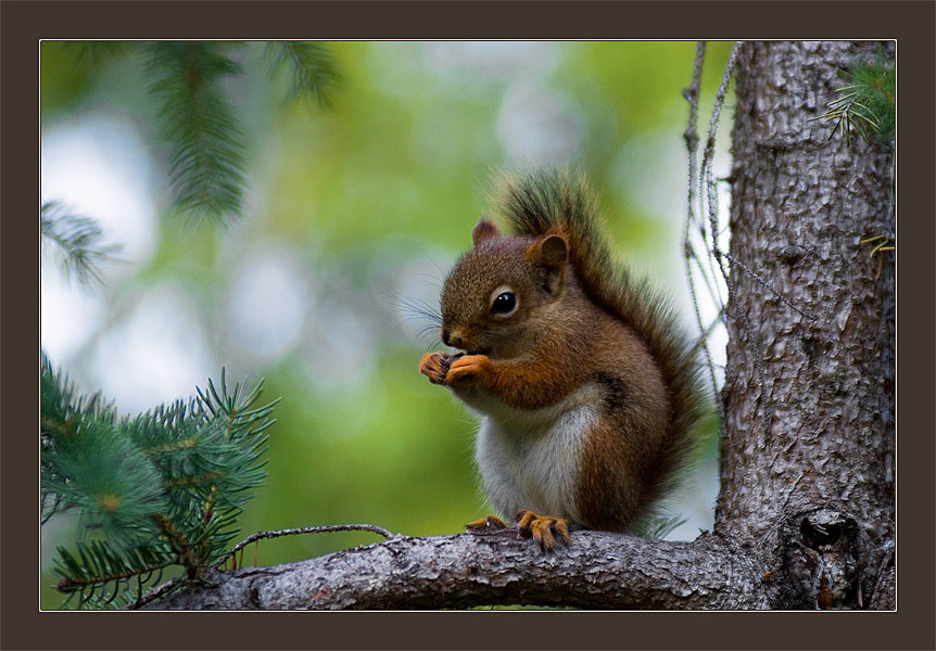 "photo ""Breakfast"" tags: nature, portrait, wild animals"