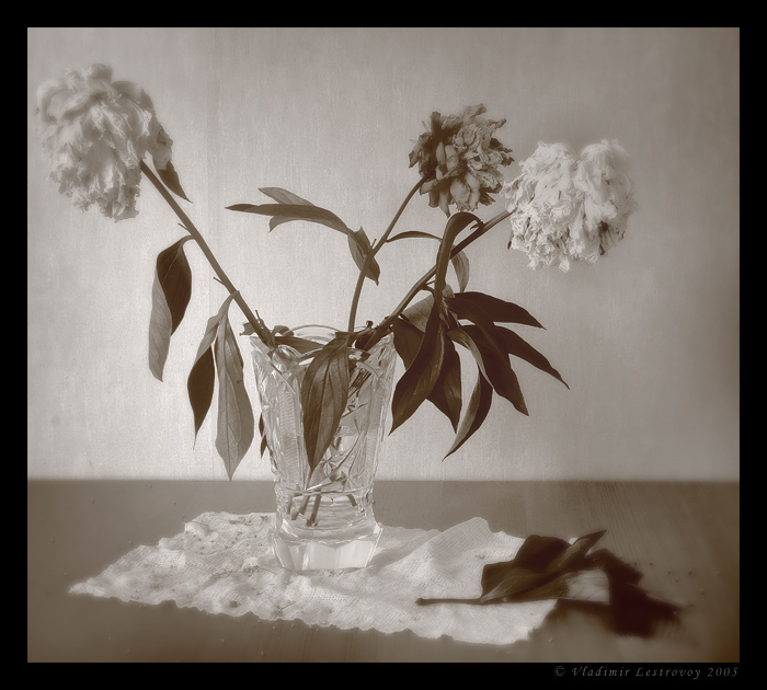 "photo ""Flowers"" tags: still life,"