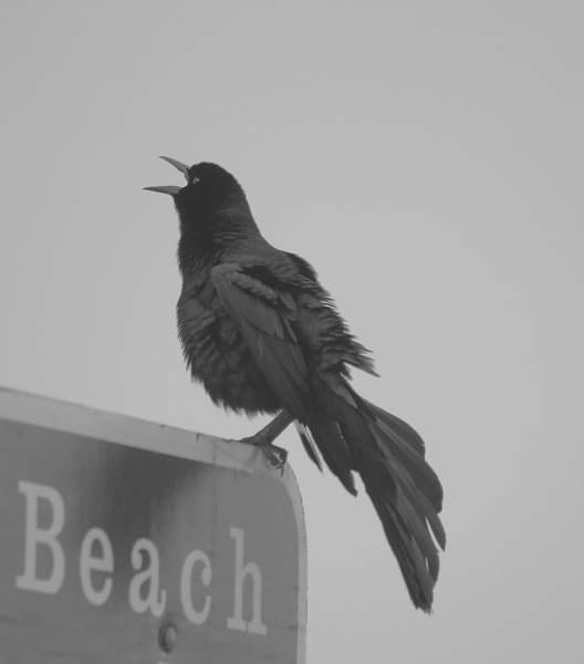"photo ""Life's a Beach"" tags: black&white, nature, wild animals"