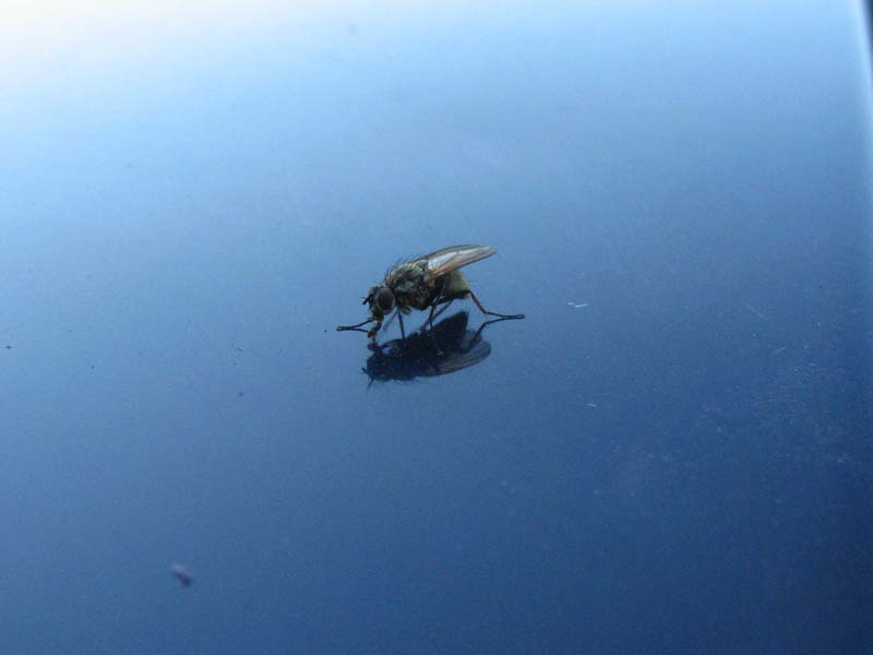 """photo """"муха"""" tags: nature, insect"""