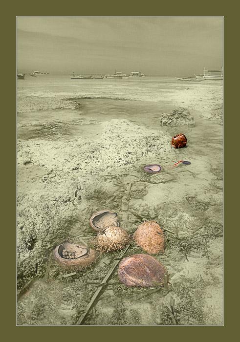"фото ""Кокосы, приплывшие по морю."" метки: путешествия, Азия"
