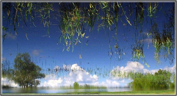 """photo """"The world behind the looking-glass"""" tags: landscape, summer, water"""