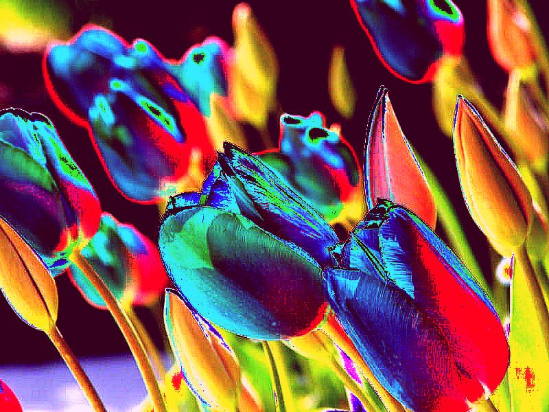 "photo ""Tulips in Abstract"" tags: nature, abstract, flowers"