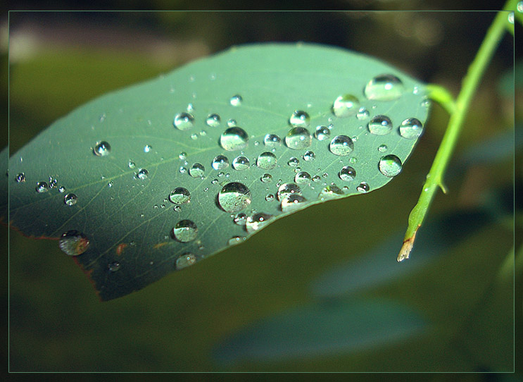 "photo ""Untitled photo"" tags: macro and close-up,"