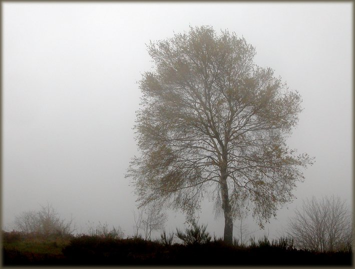 "photo ""Fogs and mists - 01"" tags: misc.,"