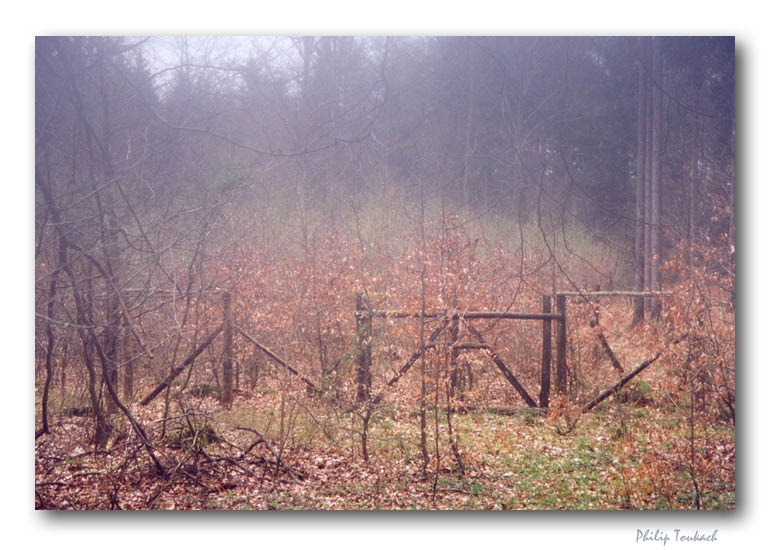 "photo ""Runes"" tags: landscape, forest, spring"