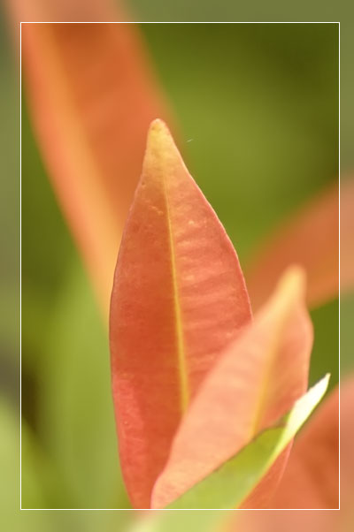 "photo ""Leaf 02"" tags: macro and close-up, nature, flowers"