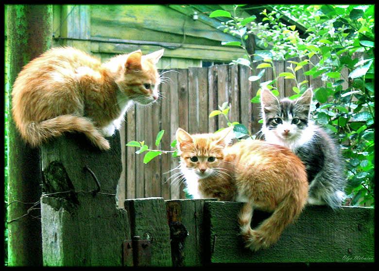 "photo ""Traum aus der Kindheit"" tags: nature, genre, pets/farm animals"