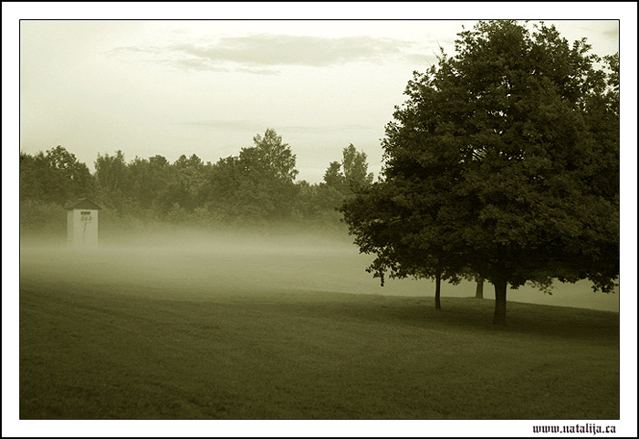 "photo ""Silence"" tags: landscape, forest, summer"