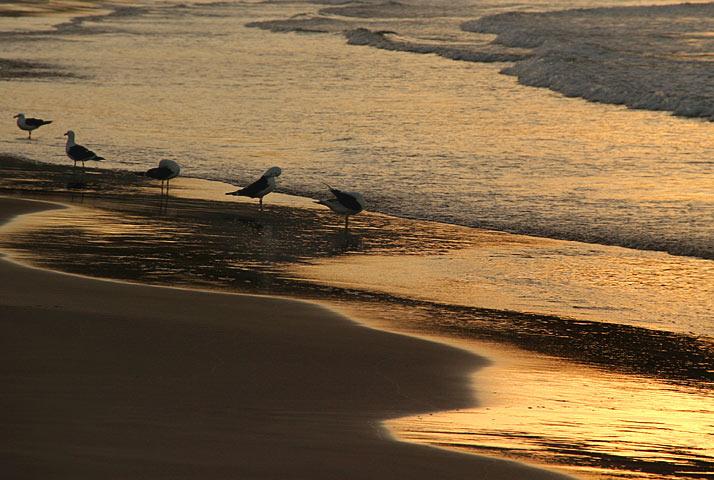 """photo """"Gulls"""" tags: nature, wild animals"""