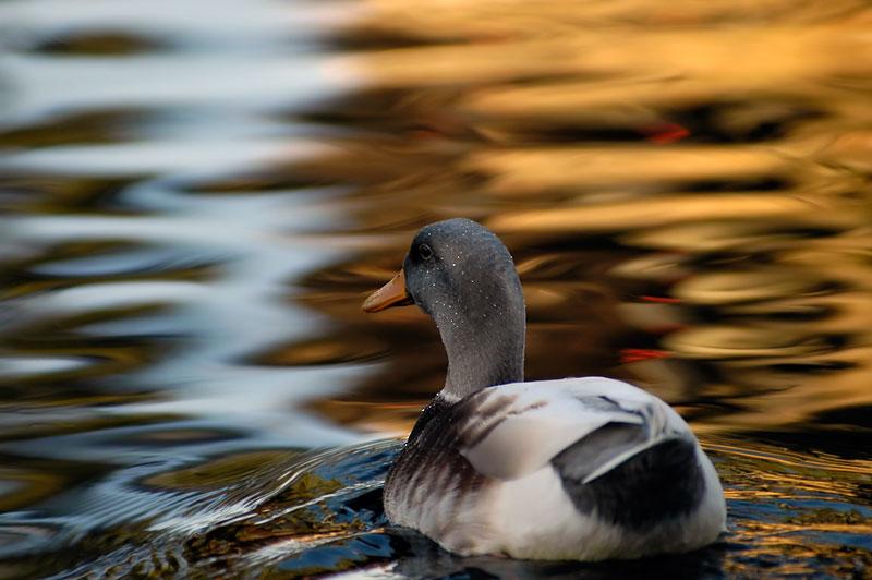 """фото """"Reflections"""" метки: природа, пейзаж, вода, дикие животные"""