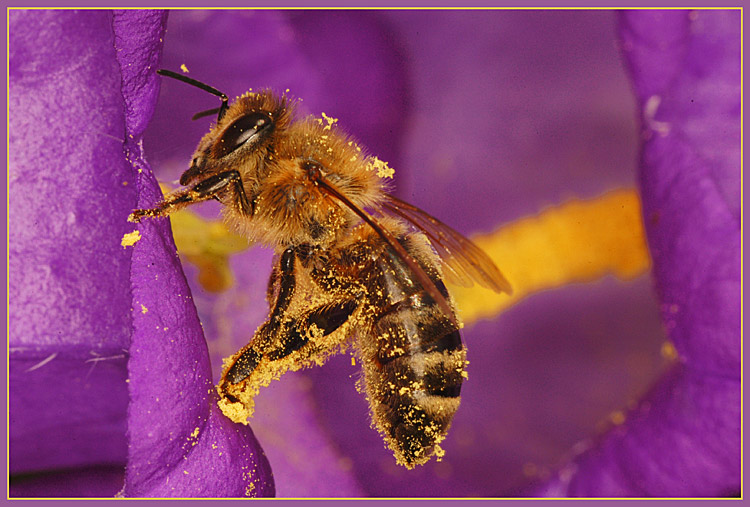 "photo ""The bee is cleared"" tags: nature, insect"