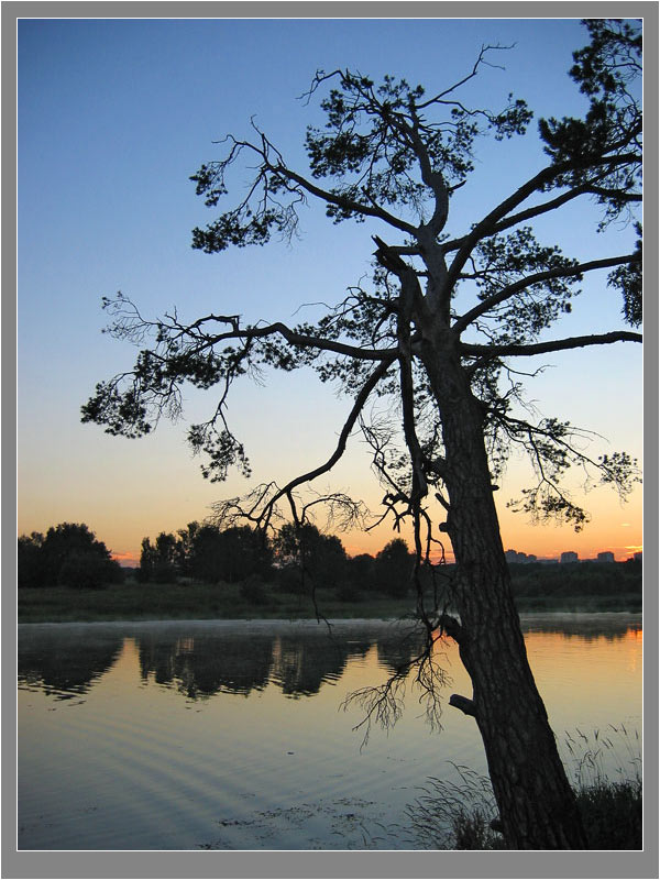 "photo ""Pine-tree"" tags: landscape, sunset, water"