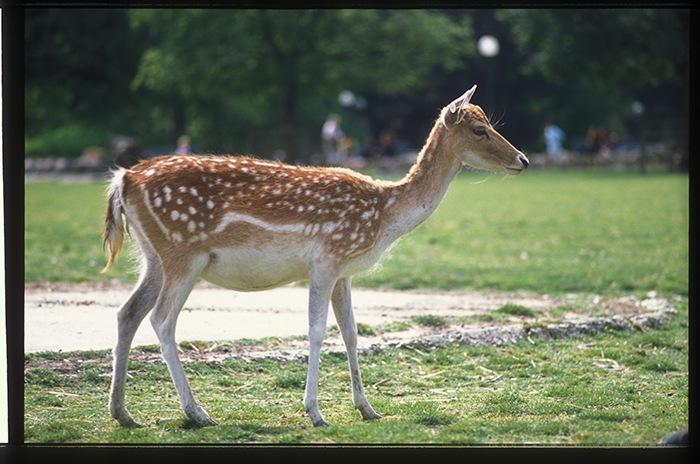"photo ""* * *"" tags: nature, wild animals"