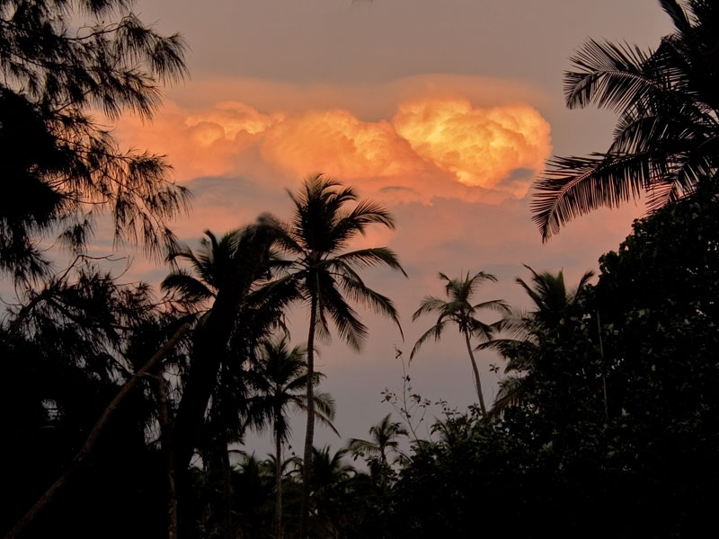 "photo ""Palm Trees in sunset Goa"" tags: nature, landscape, flowers, forest"