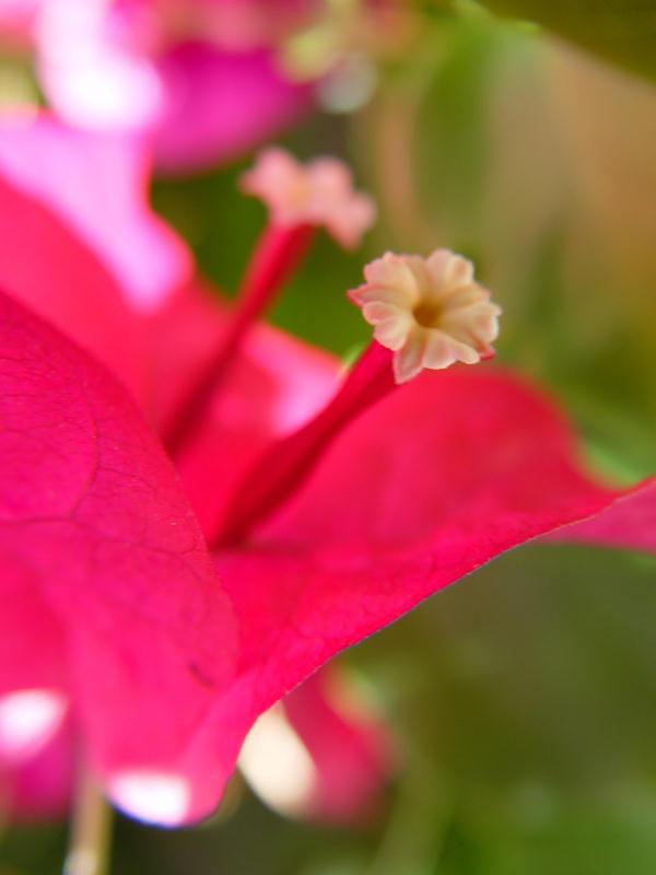 """photo """"Les Petites Fleurs"""" tags: nature, flowers"""