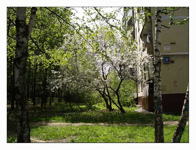 "photo ""Moscow, Northern Butovo. The spring."" tags: landscape, nature, flowers, spring"
