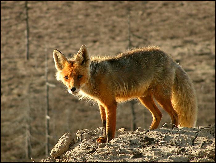 """photo """"Ну что смотришь, фотограф?! Лучше покорми..."""" tags: nature, wild animals"""