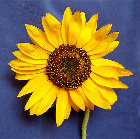 "photo ""Imitation of Van Gogh"" tags: nature, flowers"