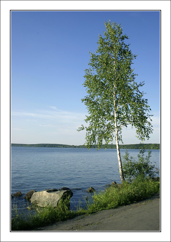 "photo ""Birch at ashore"" tags: landscape, summer, water"