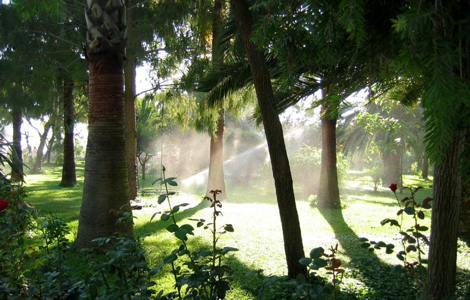 "photo ""Botanik"" tags: landscape, summer"