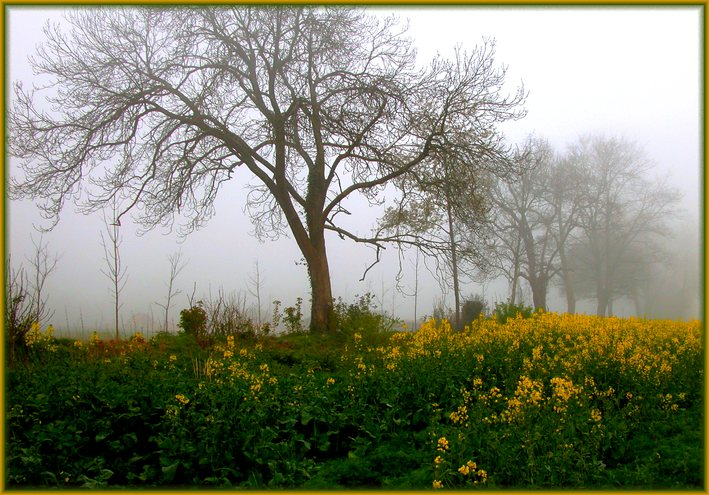 "photo ""Fogs and mists - 03"" tags: nature, landscape, clouds, flowers"
