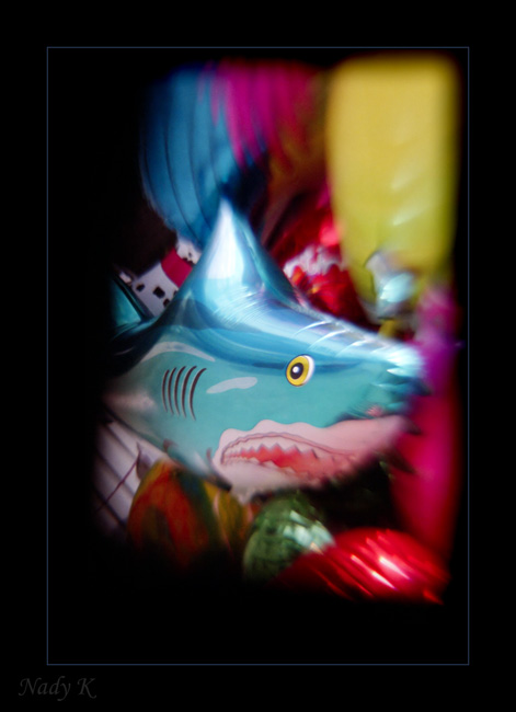 """photo """"Not malicious, but a hungry shark..."""" tags: misc., nature, wild animals"""