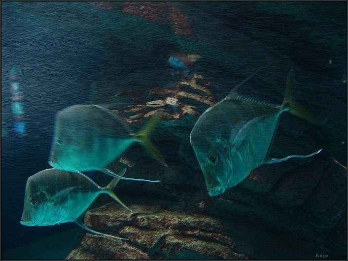 "photo ""fishs-phantoms"" tags: underwater,"