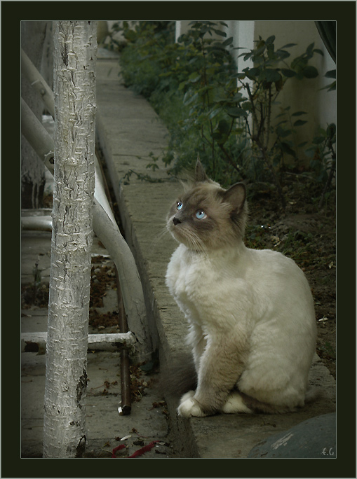 """фото """"Невинный"""" метки: природа, домашние животные"""