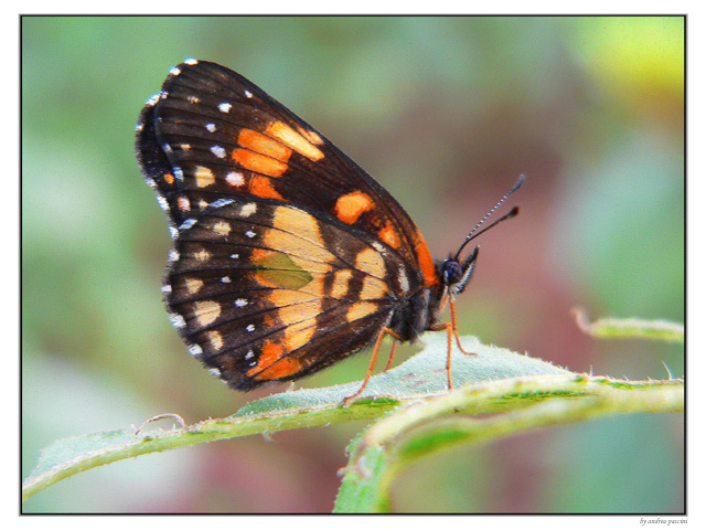 "photo """"..."""" tags: nature, insect"