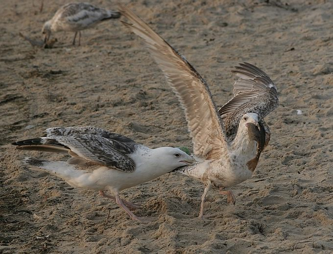 "photo ""Fight"" tags: nature, wild animals"