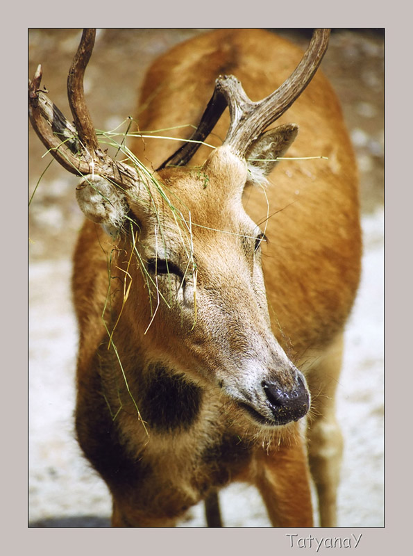 "photo ""Deer"" tags: nature, wild animals"