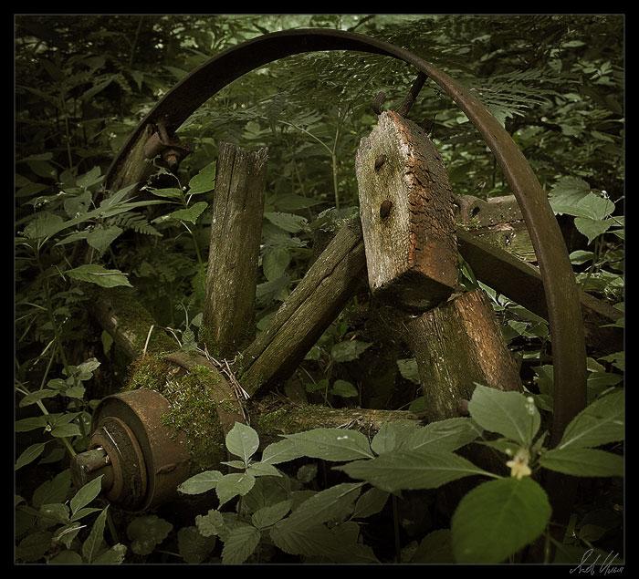 """фото """"***"""" метки: натюрморт, природа,"""
