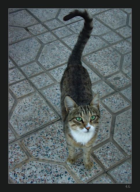 "photo ""Bezdomniy"" tags: nature, pets/farm animals"