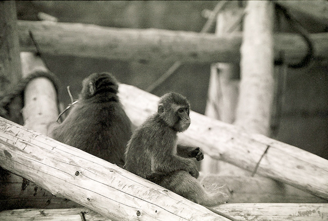 "photo ""the moscow zoo"" tags: black&white, nature, wild animals"