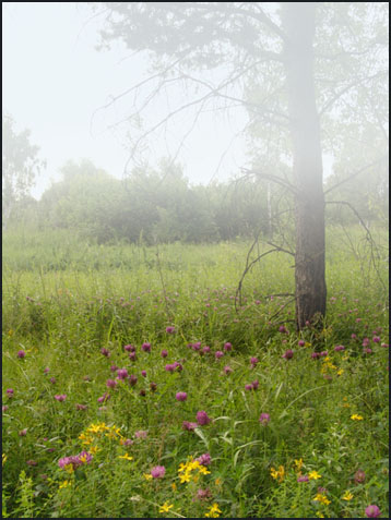"photo ""Fog and flowers"" tags: landscape, summer"