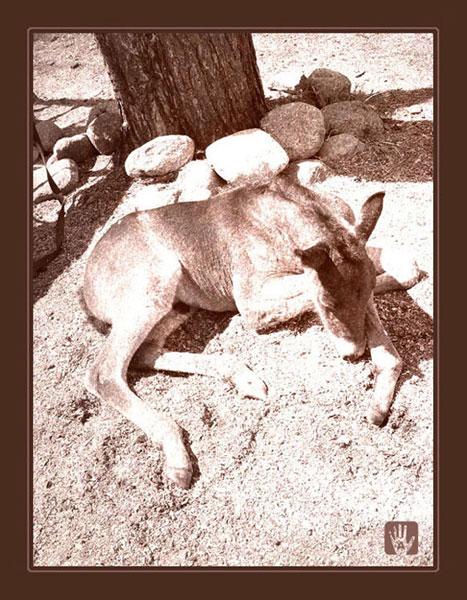 "фото ""малыш"" метки: природа, ретро, домашние животные"