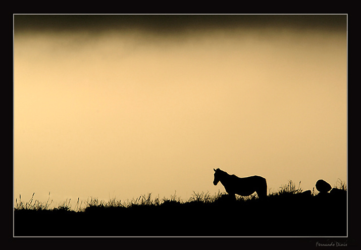 "photo ""Horse in the mountain"" tags: nature, landscape, mountains, wild animals"